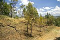 Small section of burnt bushland on Willans Hill.jpg