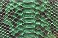 Snake Skin Texture (25).jpg