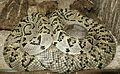 Snakes 11 (1).jpg