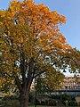 Somerville College Oxford, Vaughan in autumn.jpg