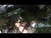 File:Sophisticated-Communication-in-the-Brazilian-Torrent-Frog-Hylodes-japi-pone.0145444.s004.ogv