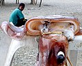 Squid for sale, near Manatuto, Timor Leste (6861718136).jpg