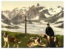 St. Bernard dogs, Valais, Alps of, Switzerland-LCCN2001703326.tif