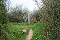 St Gennys, paths meet - geograph.org.uk - 1267801.jpg