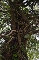 St Niklaas Tereken BP (17) - 311933 - onroerenderfgoed.jpg