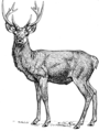 Stags (PSF).png