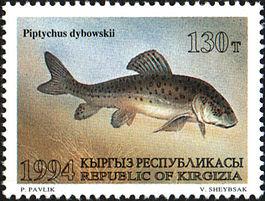 Османы (рыба) — Википедия Осман Рыба