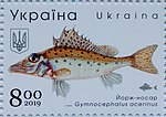 Stamp of Ukraine s1787 Gymnocephalus acerinus.jpg