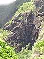 Starr-090720-3159-Aleurites moluccana-habit view black gorge-Iao Valley Rd-Maui (24852353222).jpg