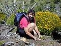 Starr 020622-0001 Bidens micrantha subsp. kalealaha.jpg