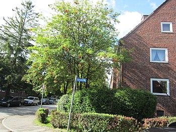 Straßenschild Hahnbusch, Kiel-Elmschenhagen.jpg