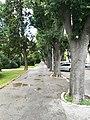 Street in Pula 62.jpg