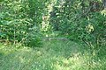 Strupceļš mežā, Ķeipenes pagasts, Ogres novads, Latvia - panoramio.jpg
