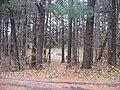 "Studebaker ""D"" in Bendix Woods Park.jpg"