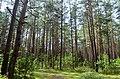 Subartonių miškai.JPG
