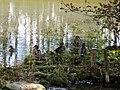 Sulphur Springs Conservation Area (44668772791).jpg