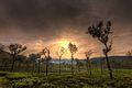 Sunrise in the Nilgiris.jpg