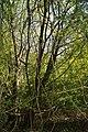 Töpker Teich Bäume.jpg