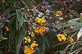 TU Delft Botanical Gardens 90.jpg