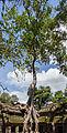 Ta Phrom, Angkor, Camboya, 2013-08-16, DD 31.JPG