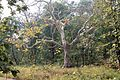 Tadoba Andhari Tiger Project 15.jpg