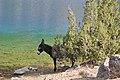 Tajikistan Fan-Mountains - landscape 12.jpg