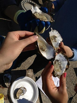 Tomales Bay - Tomales Bay oysters