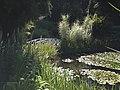 Tasmania gardens.jpg