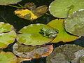 Tema Nezahat Gokyigit Park 1060552 20080513124041.JPG