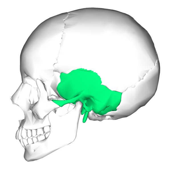 File:Temporal bone lateral5.png