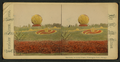 The Globe, in living plants, Washington Park, Chicago, by Chase, W. M., 1818 or 19-1905 2.png