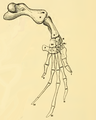 The Osteology of the Reptiles-196 kjh iuyhg kijhgv uyhg.png