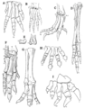 The Osteology of the Reptiles p191.png