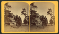 The oldest inhabitant, Manitou Park, by Gurnsey, B. H. (Byron H.), 1833-1880.png