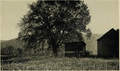 Tiadaghton Elm 1939.png