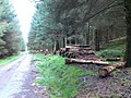 Timber stacks, Hafod Lom woods - geograph.org.uk - 966201.jpg