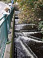 Tobermory River - geograph.org.uk - 270778.jpg