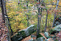 Top-of-Rim-Rock-National-Recreation-Trail-leading-to-Pounds-Hollow-in-autumn.jpg