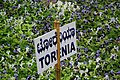 Torenia at lalbagh7369.JPG