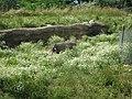 Toronto Zoo IMG 1151 (194432579).jpg