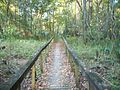 Torreya Park bridge path02.jpg