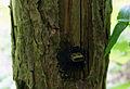 Toter Briefkasten (USB-Stick).JPG