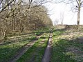 Track Beside Fox Colvert Plantation - geograph.org.uk - 1215486.jpg