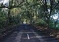 Tree covered lane. - geograph.org.uk - 304363.jpg
