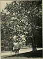 Trees and shrubs of Prospect park (1906) (14781360894).jpg