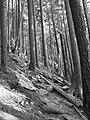 Trees on slope 1 (B&W) (2912769639).jpg