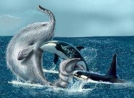 102+ Gambar Hewan Gajah Laut Gratis Terbaru
