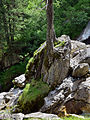 Tux - Naturdenkmal ND 9 39 - Umgebung der Schraubenfallhöhle - IV.jpg