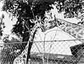 Twee giraffes, Bestanddeelnr 252-1426.jpg
