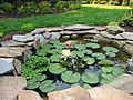 Two Water Lily Blooms - panoramio.jpg